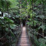 Wishing-Tree-Track