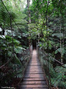 The Wishing Tree Track – Gold Coast Hinterland