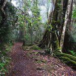 picnic-rock-walking-trail-hinterland-Gold-Coast