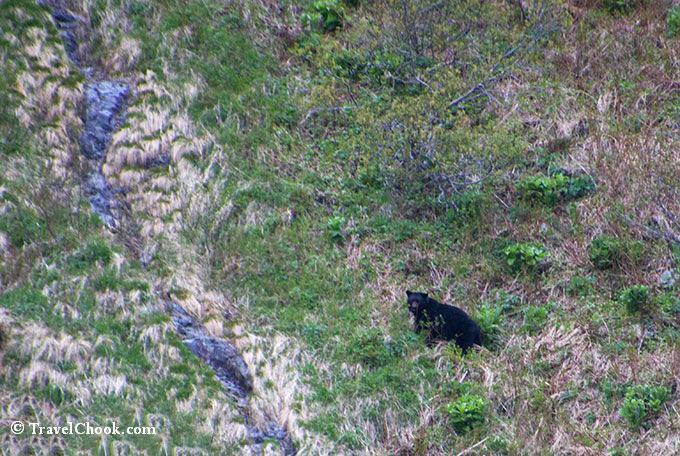 Bear-Kenai-Fjords-cliffs