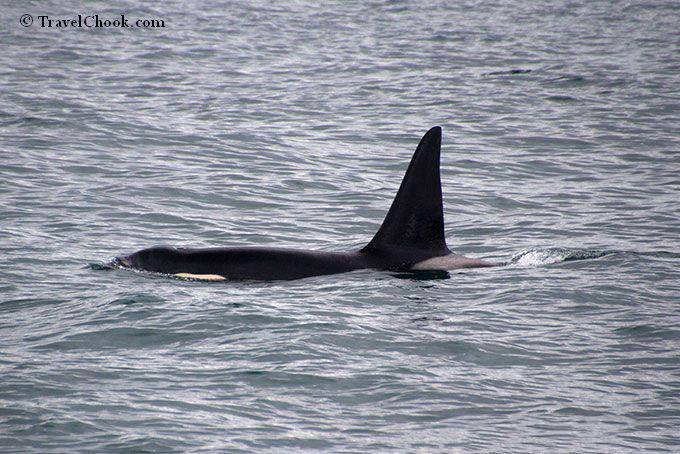 Seward-cruise-wildlife