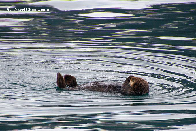otter-resurrection-bay