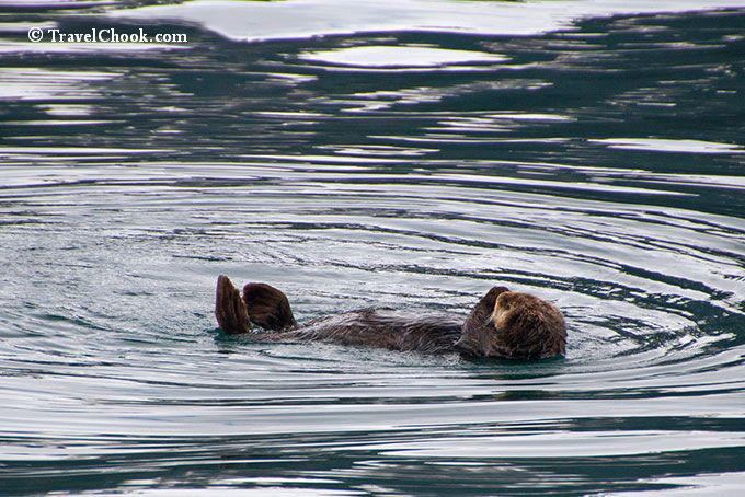 otter-resurrection-bay