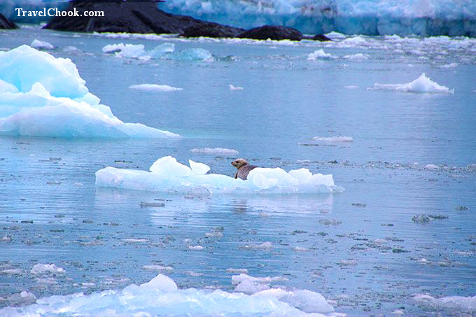 seal-on-ice-kenai-fjords