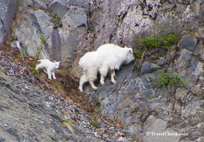 wildlife-alaska-kenai-fjords-cruise-sights