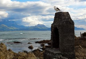 Kaikoura – The best place to see wild seals