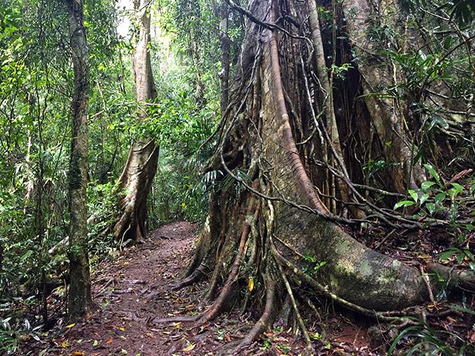 Binna Burra Walking Trail