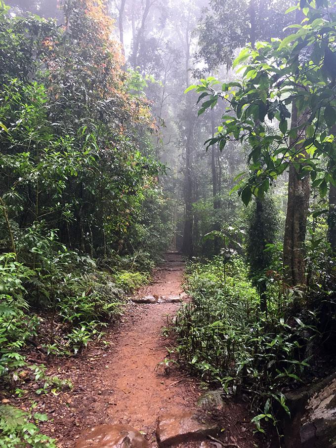 Rainforest Circuit Track - Binna Burra