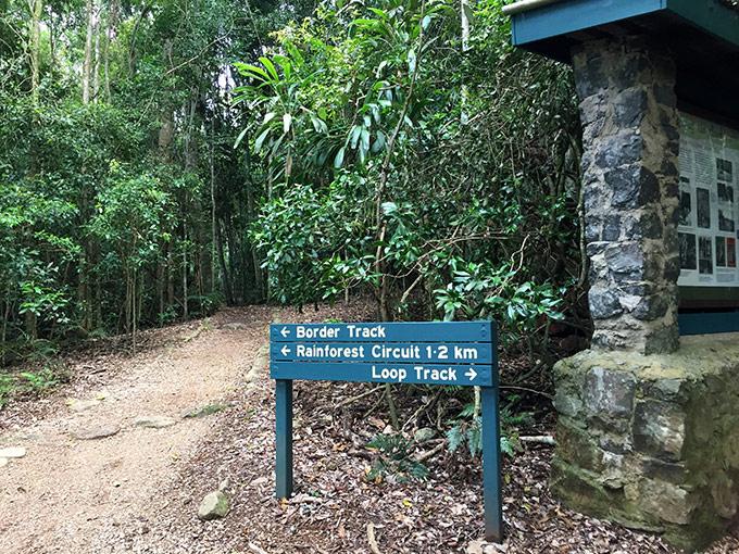 Rainforest circuit
